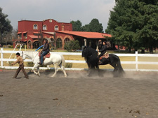 Mexico-Central Mexico-Ajusco Riding Holidays
